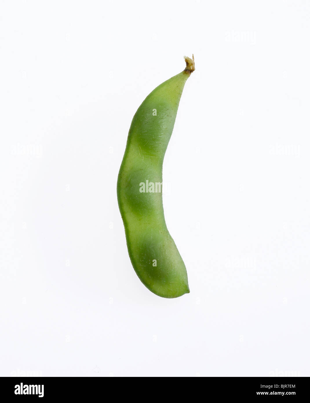 soybean and pod - Stock Image