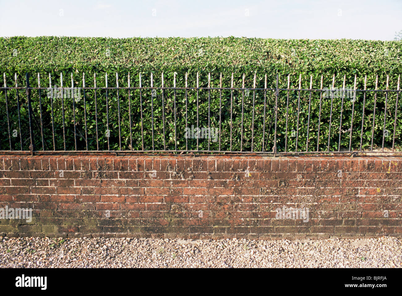 Hedge and wall - Stock Image