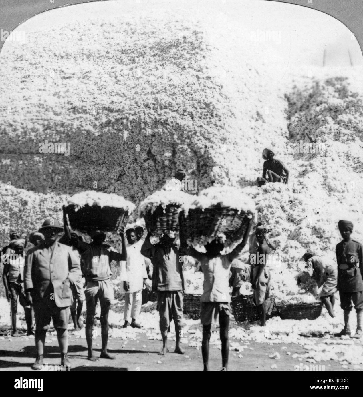Cotton Factory: Man Work 1900s Stock Photos & Man Work 1900s Stock Images