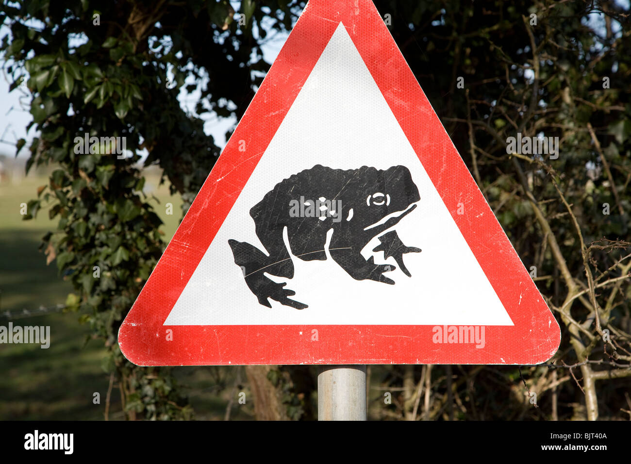 Red triangular road sign of frog or toad - Stock Image