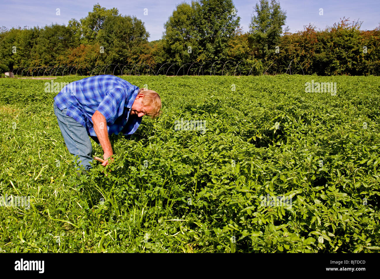 Traditional watercress farming Chess Valley Chilterns Hertfordshire Stock Photo