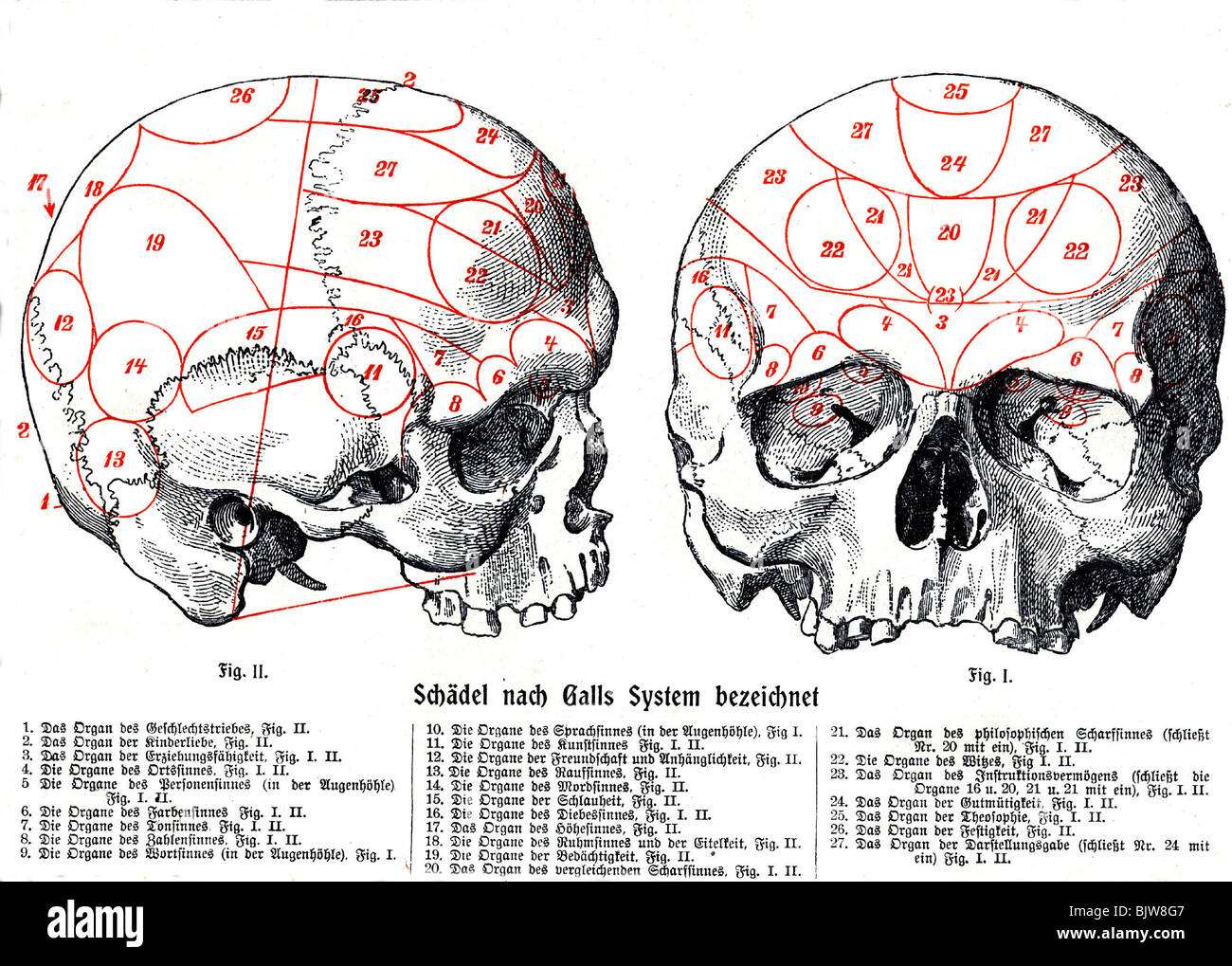 medicine, anatomy, brain, skull, human anatomy after Gall with separate centres, historic, historical, science, - Stock Image