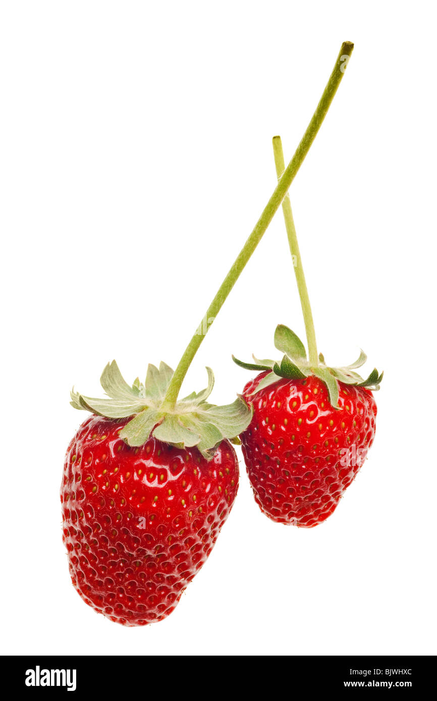 ripe red strawberries with stems and leaves isolated on white background Stock Photo