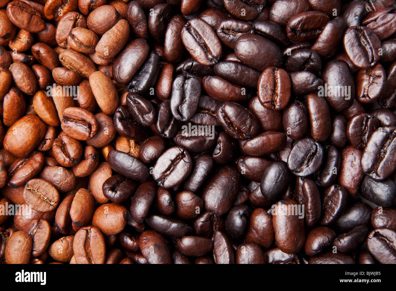 coffee bean background with light and dark roast - Stock Image