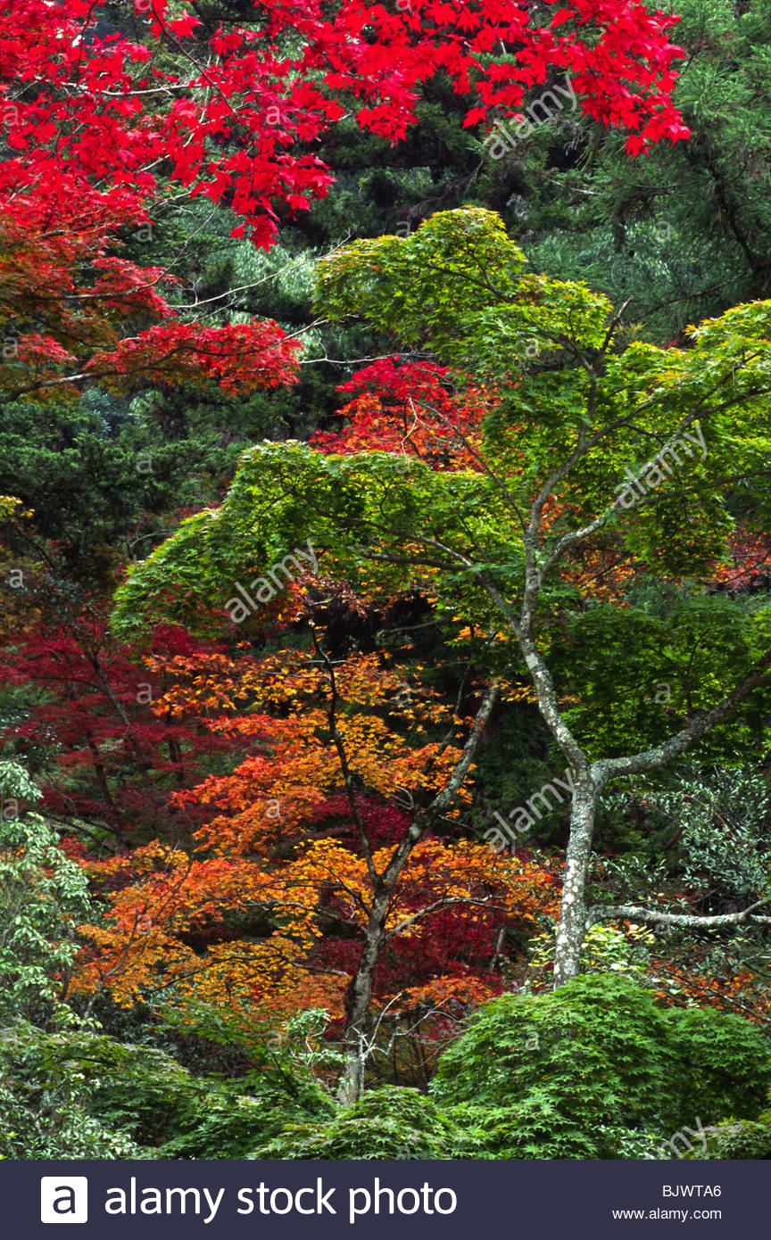 Multicolored Trees During Autumn In Stock Photos & Multicolored ...