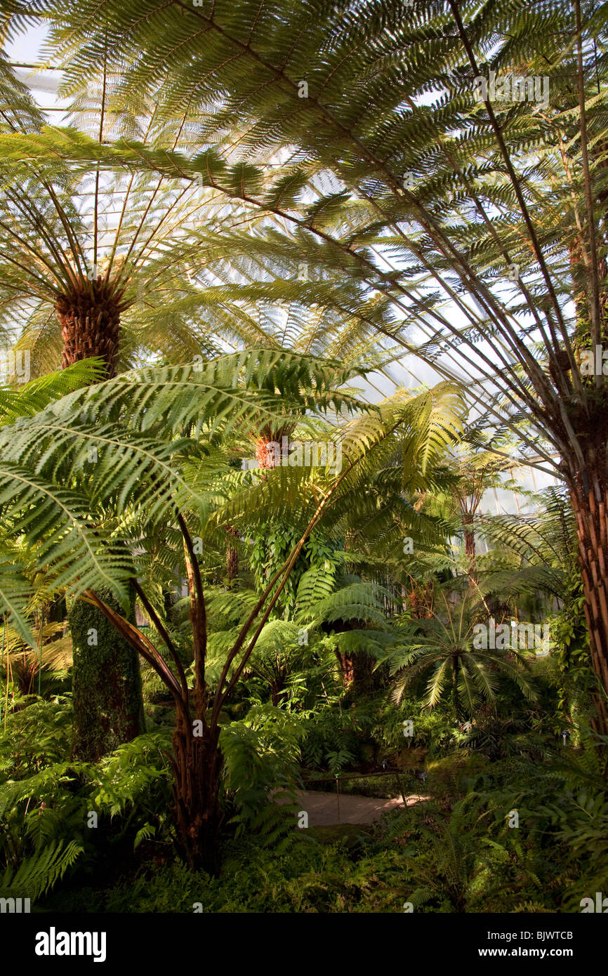 Royal Botanic Garden, Edinburgh, Scotland - Stock Image