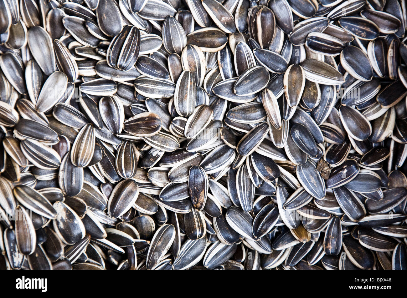 Sunflower seeds - Stock Image