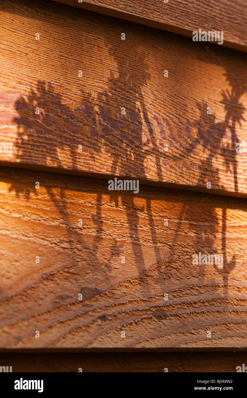 Flower shadows on a wooden fence in a garden Stock Photo