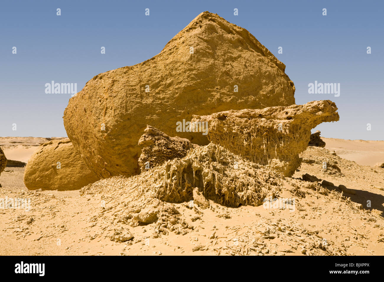 Fossilised mangrove tree roots in the Valley of The Whales, Wadi El-Hitan, Western Desert of Egypt Stock Photo