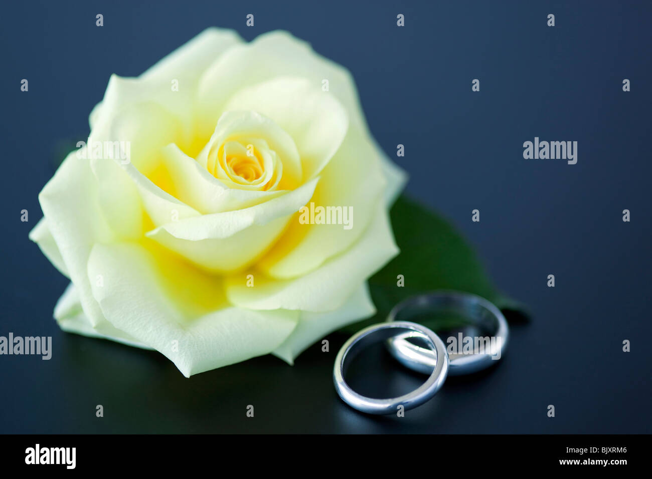 Yellow Rose And Wedding Rings Stock Image: Yellow Roses Wedding Rings At Reisefeber.org