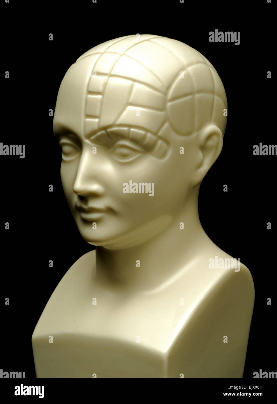 A bust of a phrenology head - Stock Image