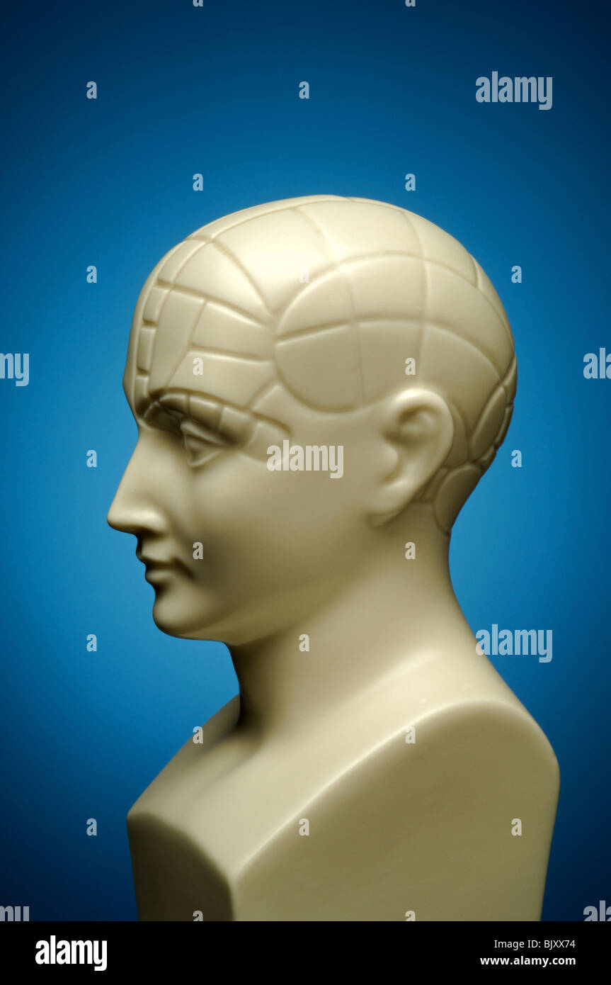 A bust of a phrenology head, profile - Stock Image