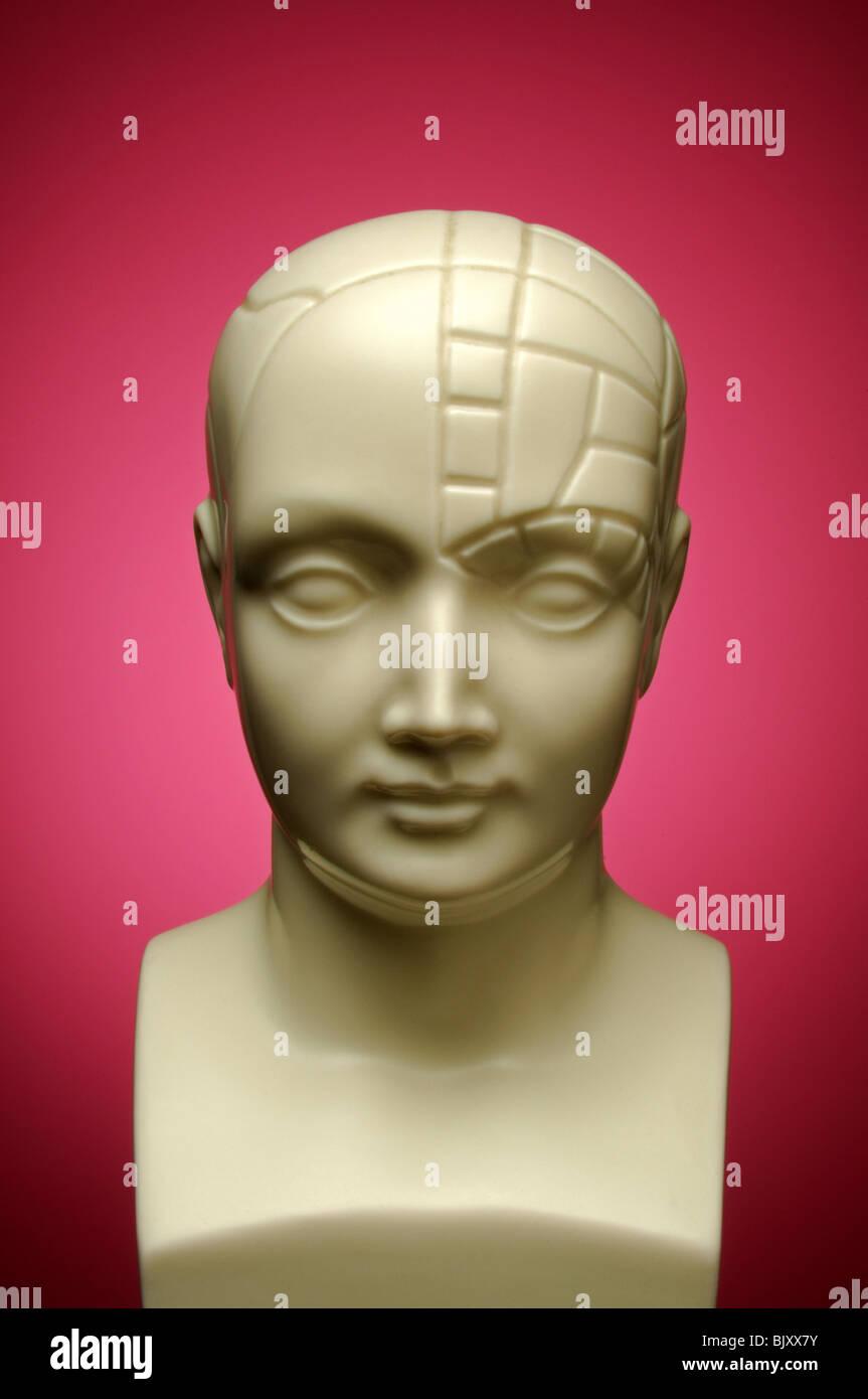 A bust of a phrenology head facing forward - Stock Image