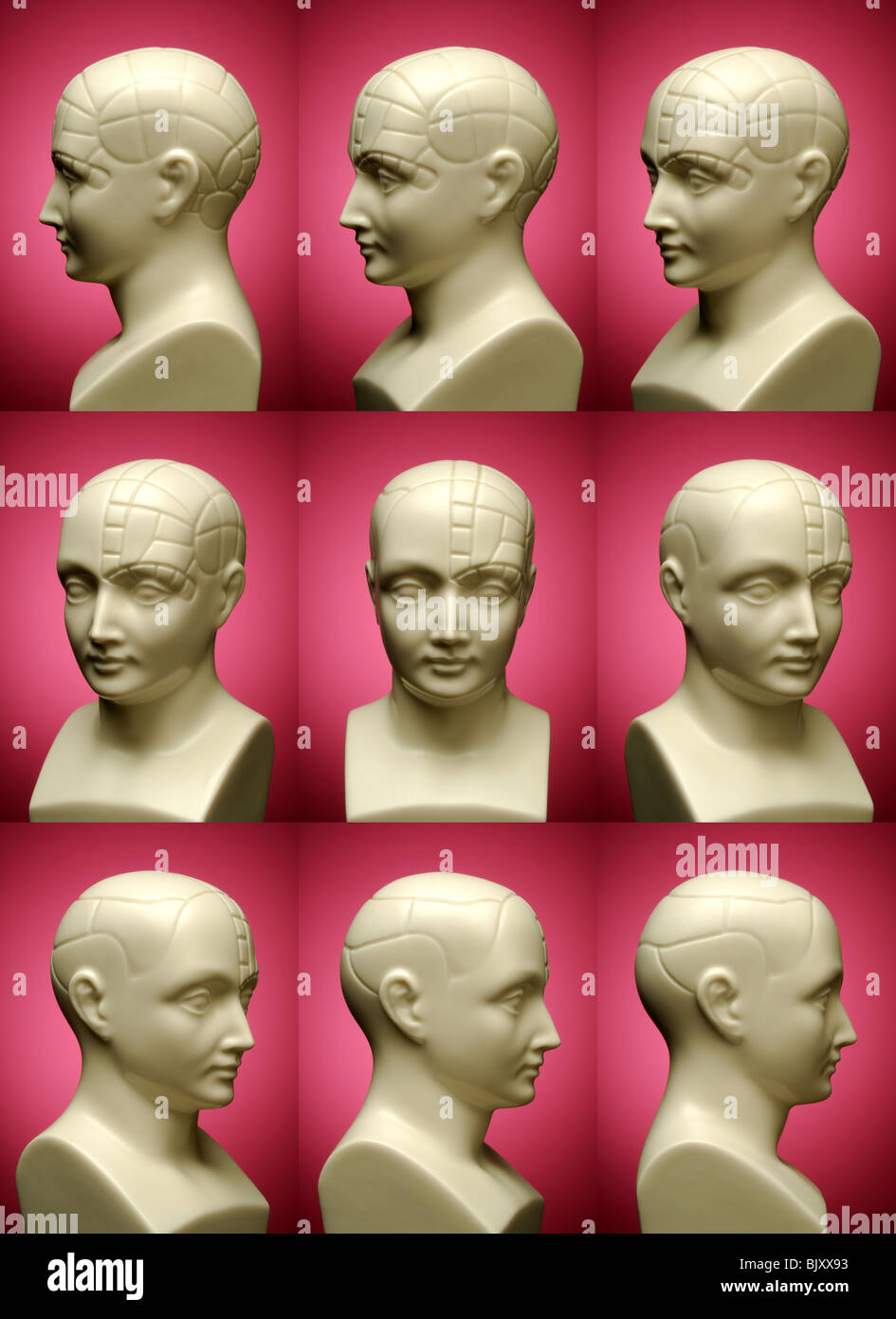 Nine Different Ways You Can Put Your Goals In Writing: Phrenology Bust Stock Photos & Phrenology Bust Stock