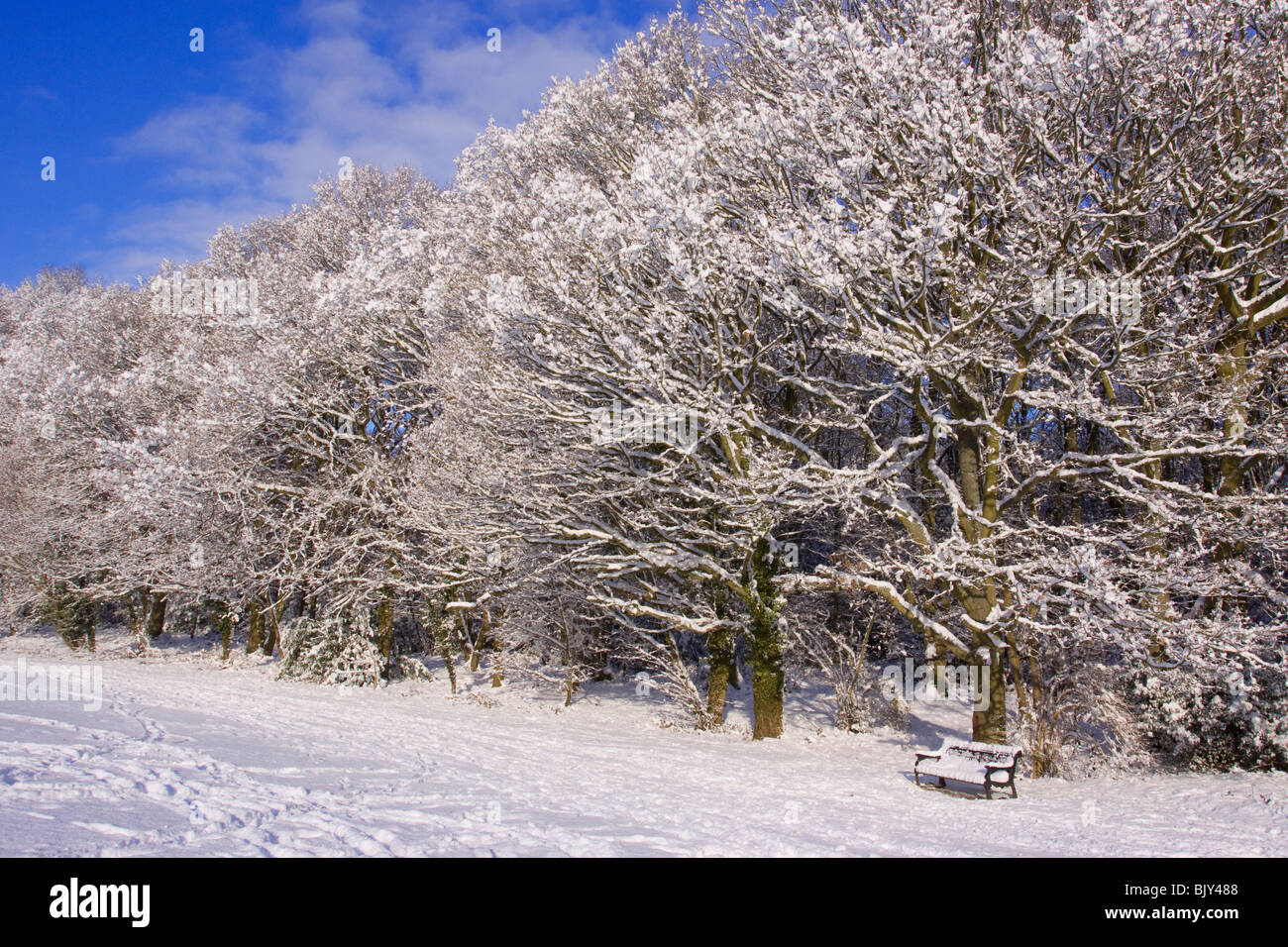 snow woods winter cold Buckinghamshire Chilterns - Stock Image