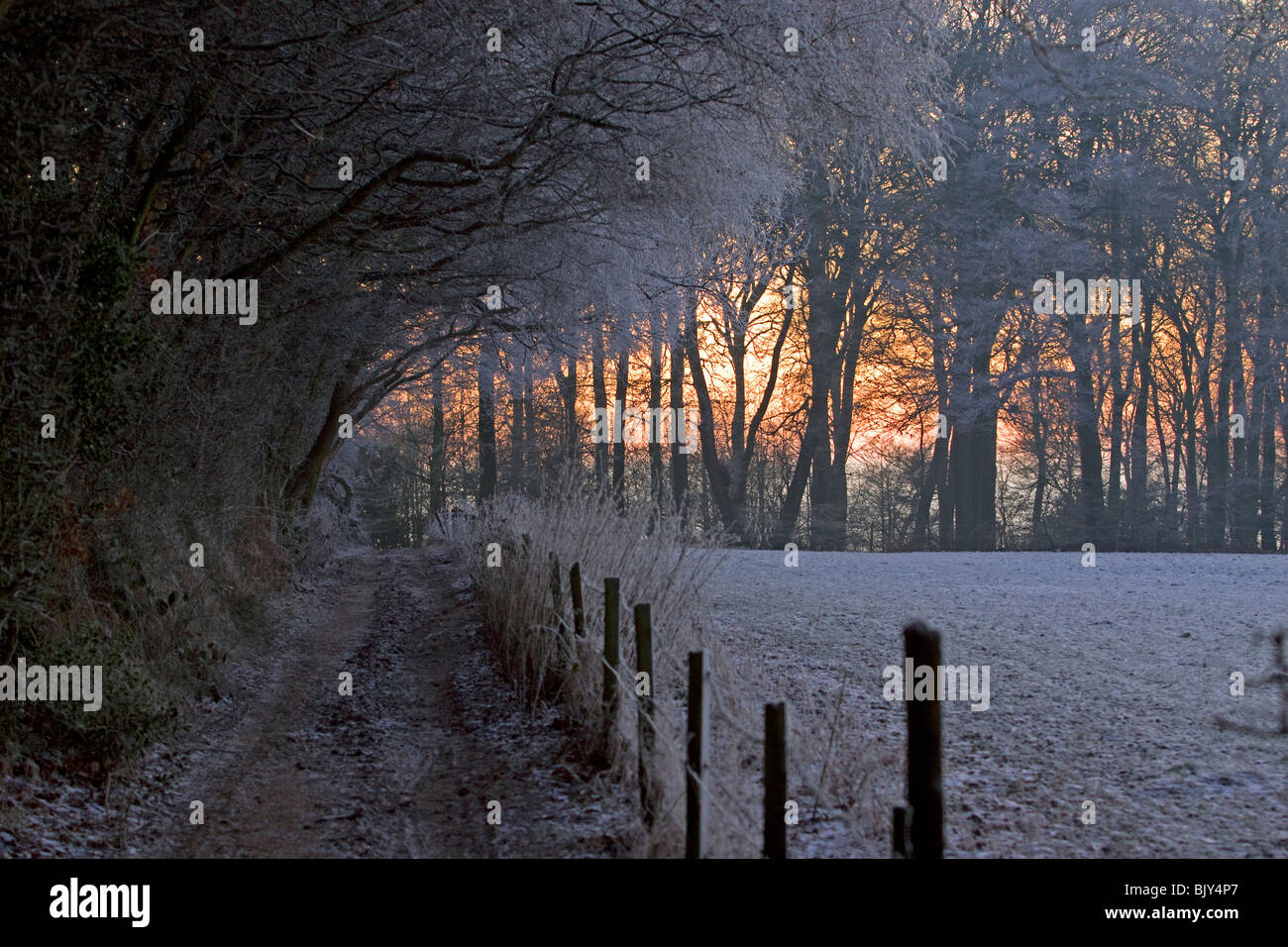 Chilterns frost winter cold frosty walk woods Buckinghamshire - Stock Image