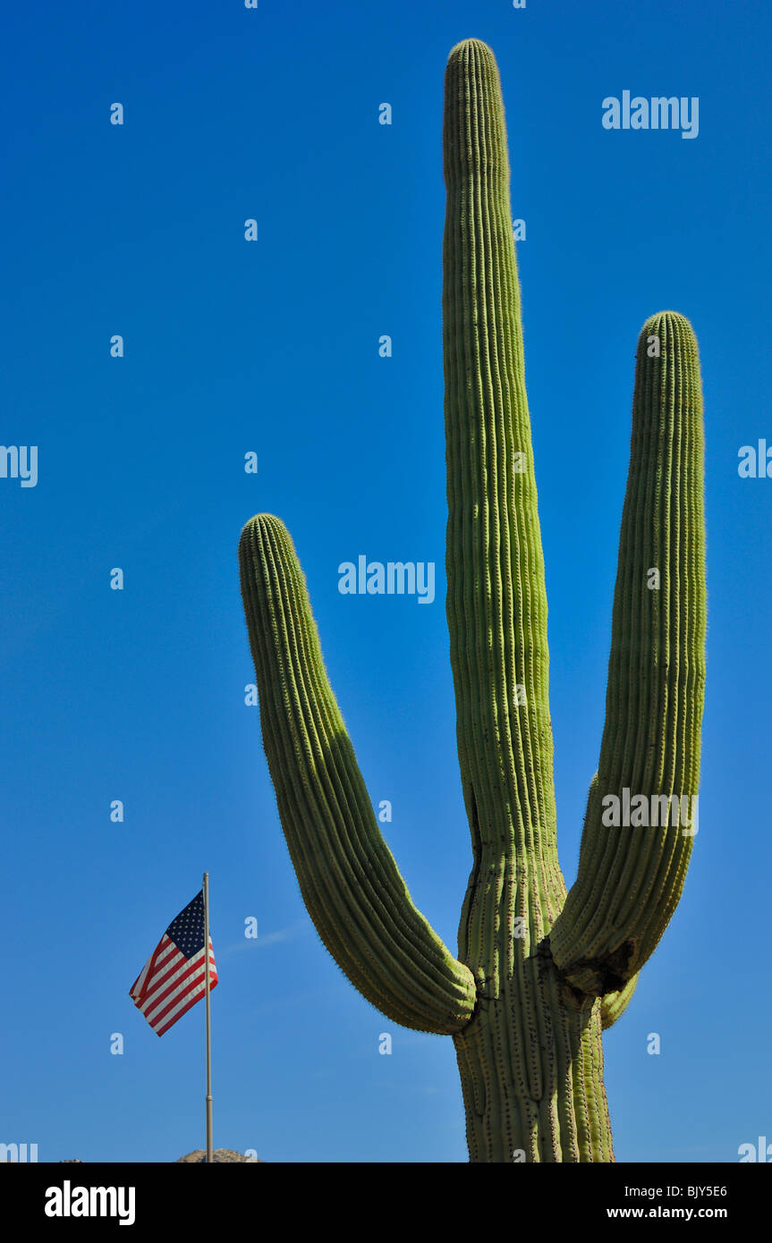 Saguaro Cactus and an American flag at Saguaro National Park West, near  Tucson in Arizona, United States of America - Stock Image