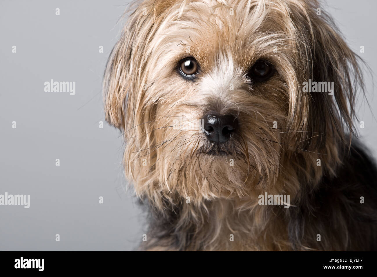 Beautiful Shot of a Cute Looking Dog - Stock Image