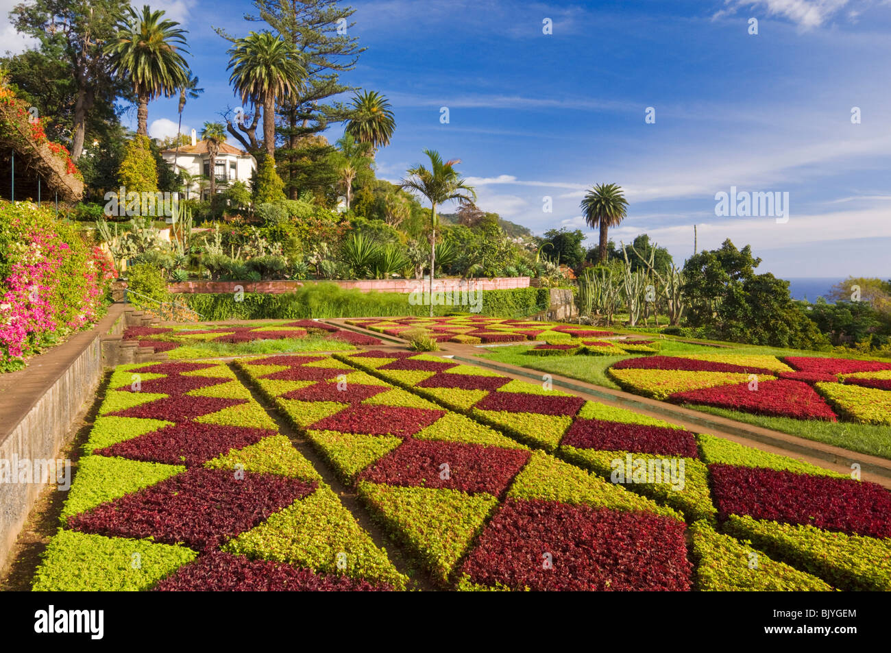 The formal gardens at the Botanical gardens Jardim Botanico Funchal Madeira Portugal EU Europe - Stock Image