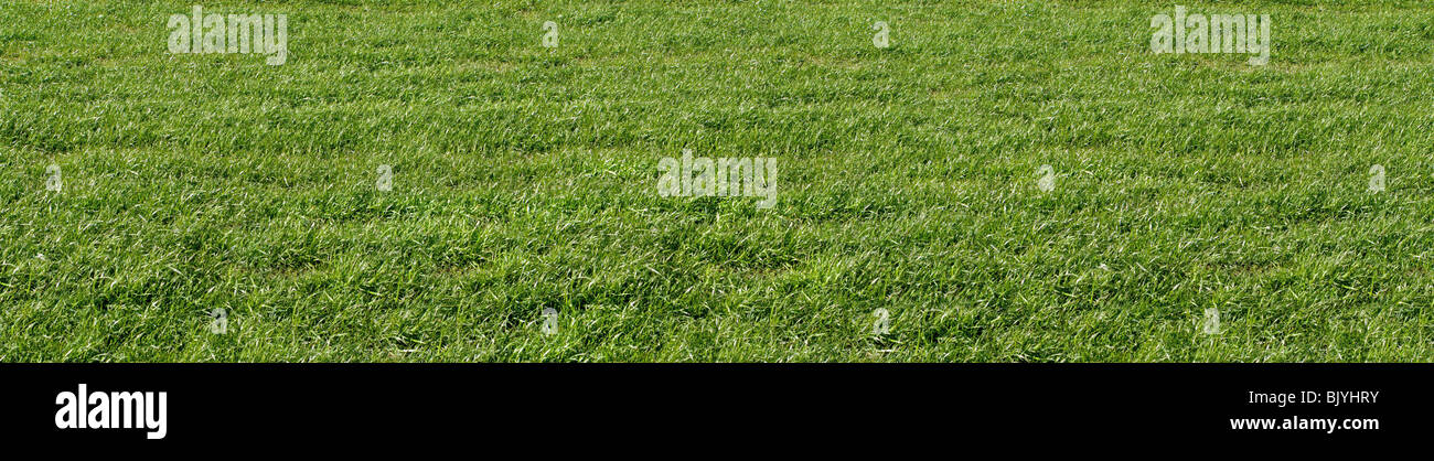 A plain field of grass close up - Stock Image