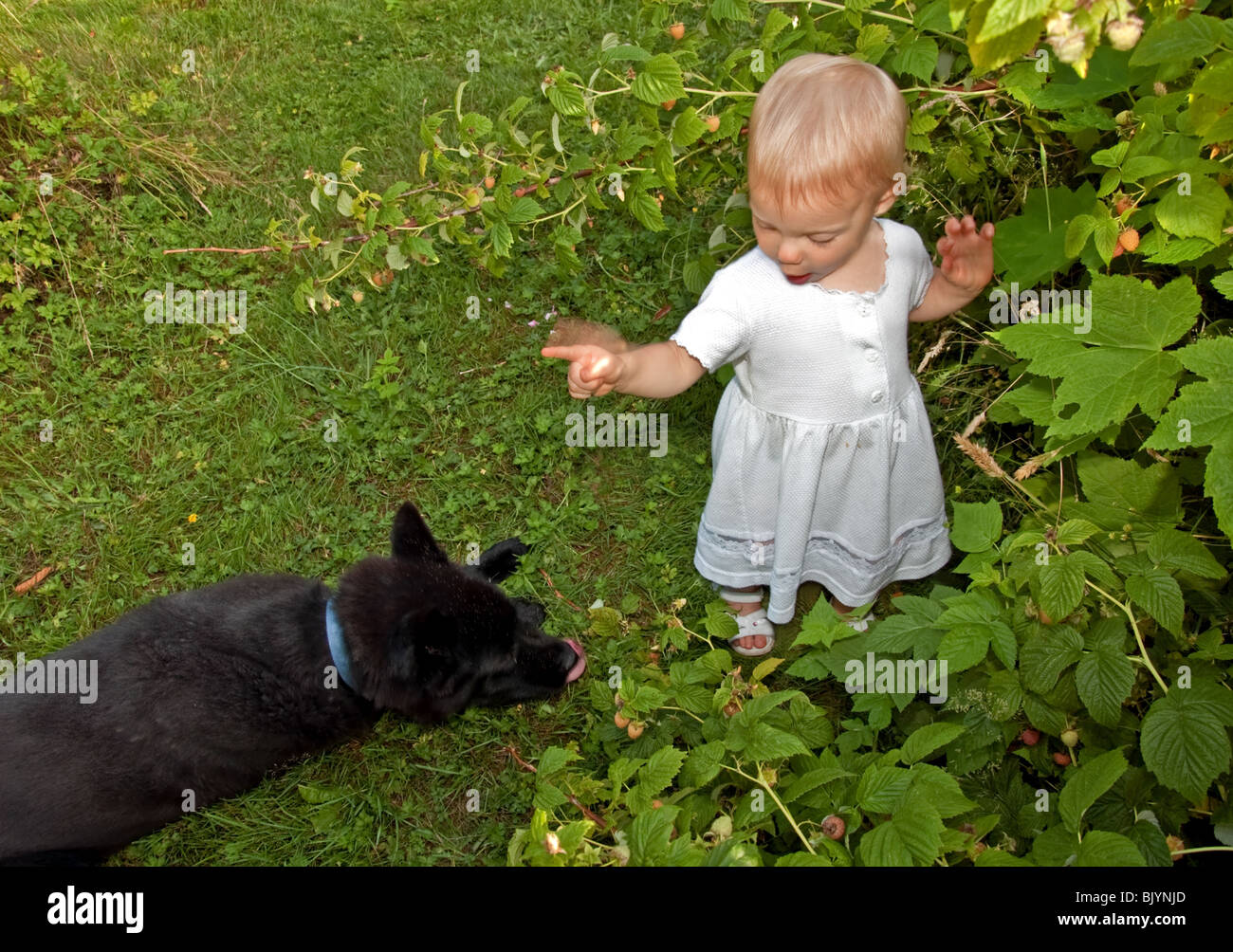 This cute 18 month old toddler girl is wearing a long white dress and  sandals while shaking a finger and scolding a pet dog. 012f225347a6