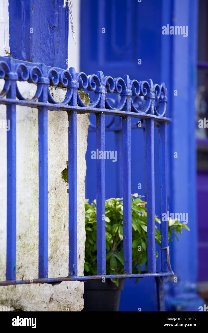 blue painted railings and green plant - Stock Image