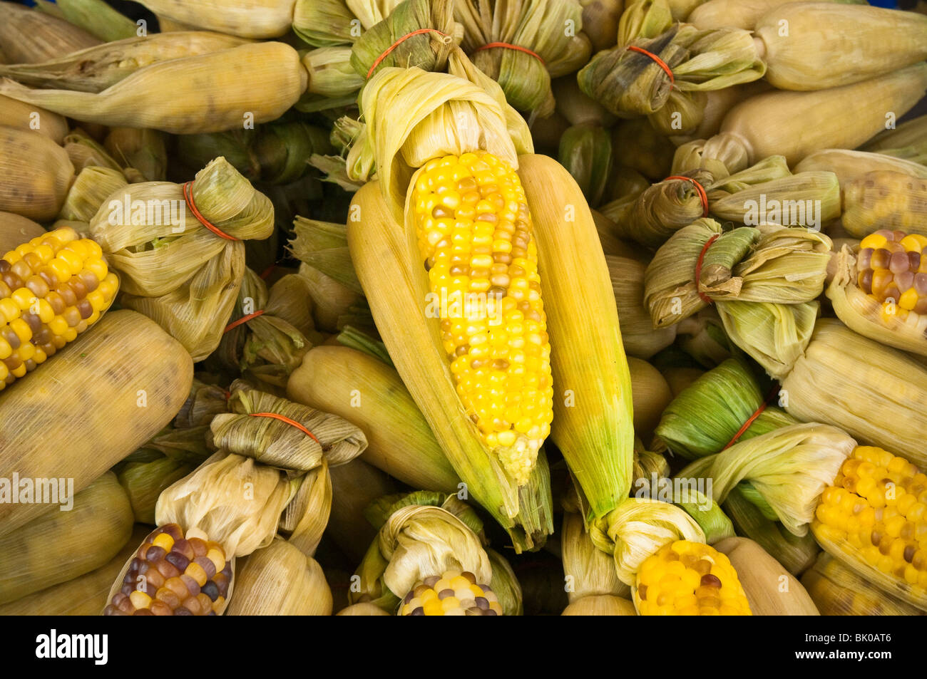 Fresh corn on the cob for sale in Chatuchak Weekend Market food vendor stall; Bangkok, Thailand. - Stock Image