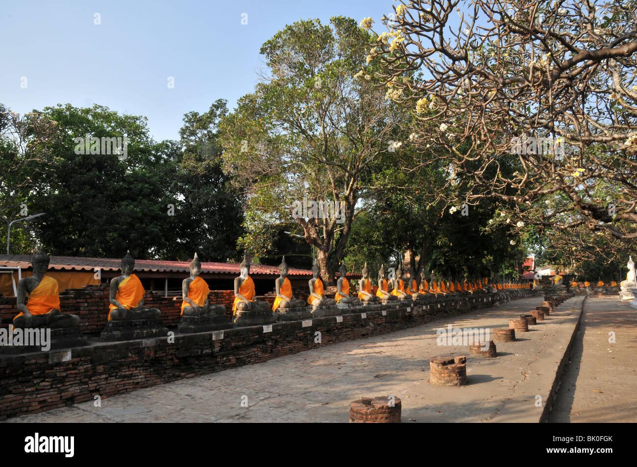 Thailande, Ayutthaya, Boudha drapé, Le Phra Mongkhon Bophi; - Stock Image