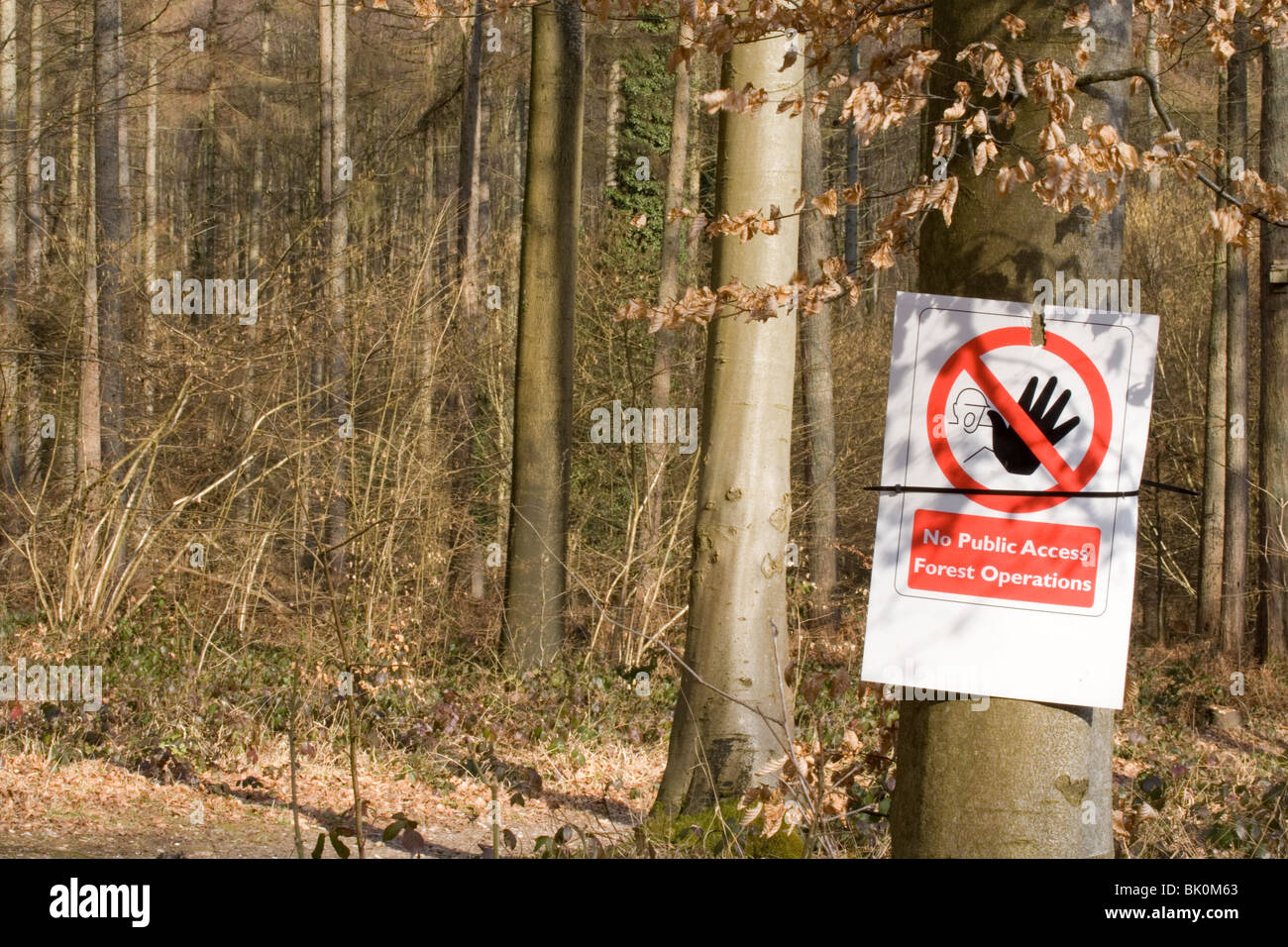 Forest Management No Public Access Forest Operations Sign UK - Stock Image