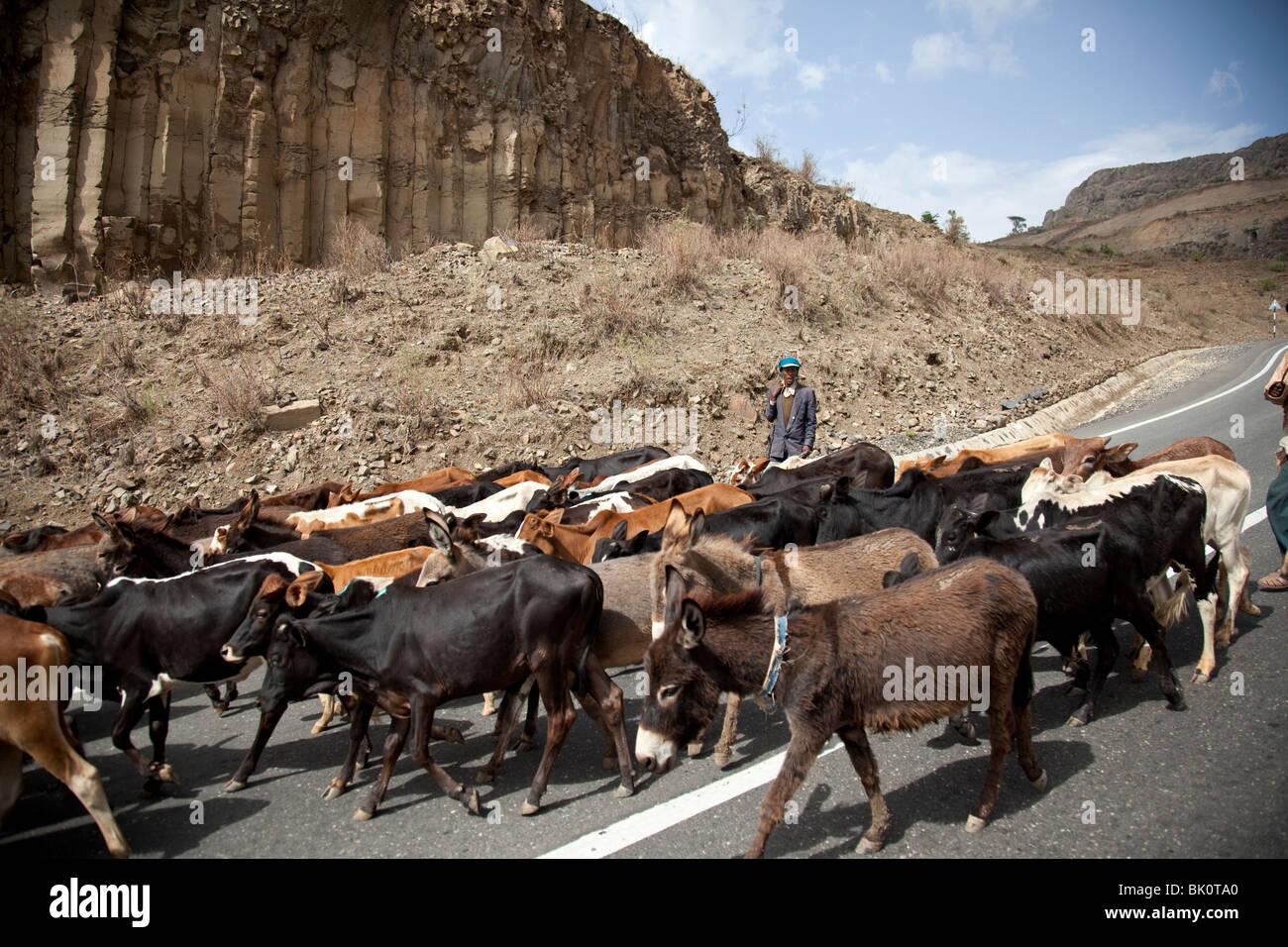 Cattle farmer, Blue Nile Valley, Ethiopia - Stock Image
