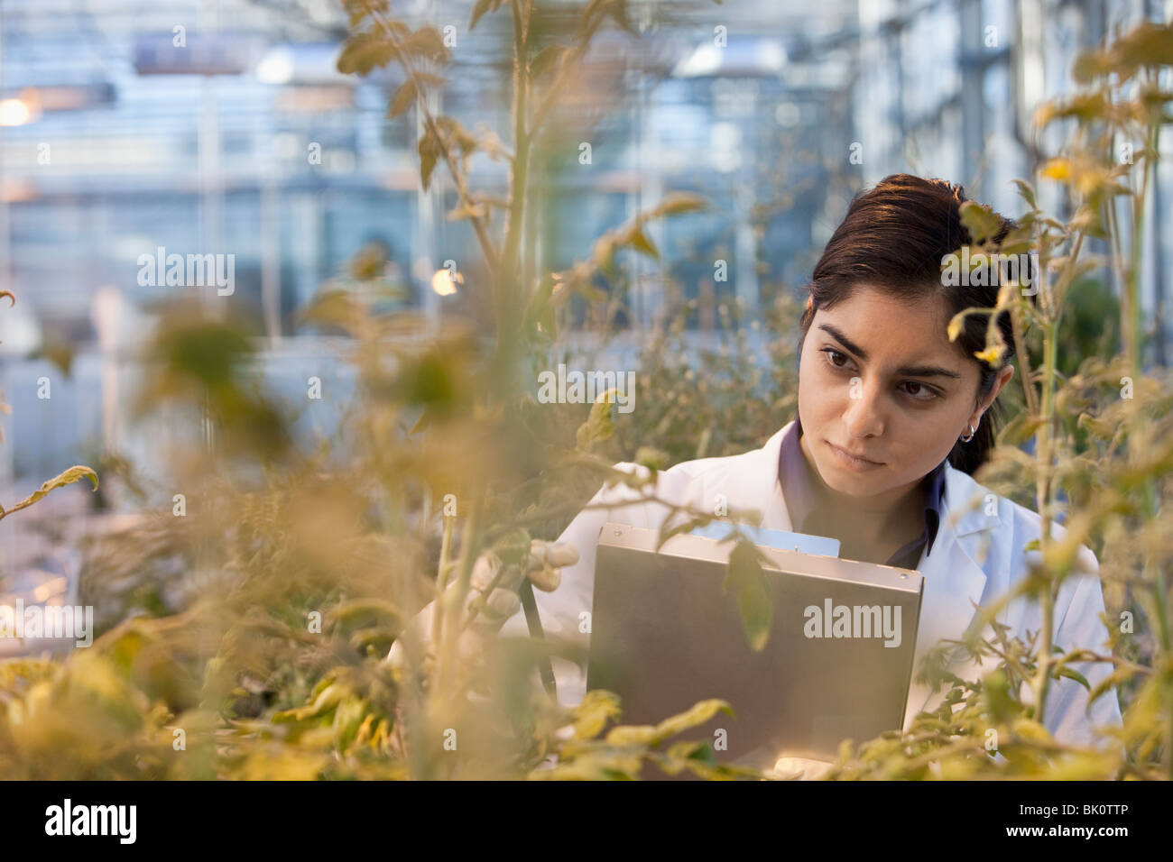 Indian scientist working in greenhouse Stock Photo