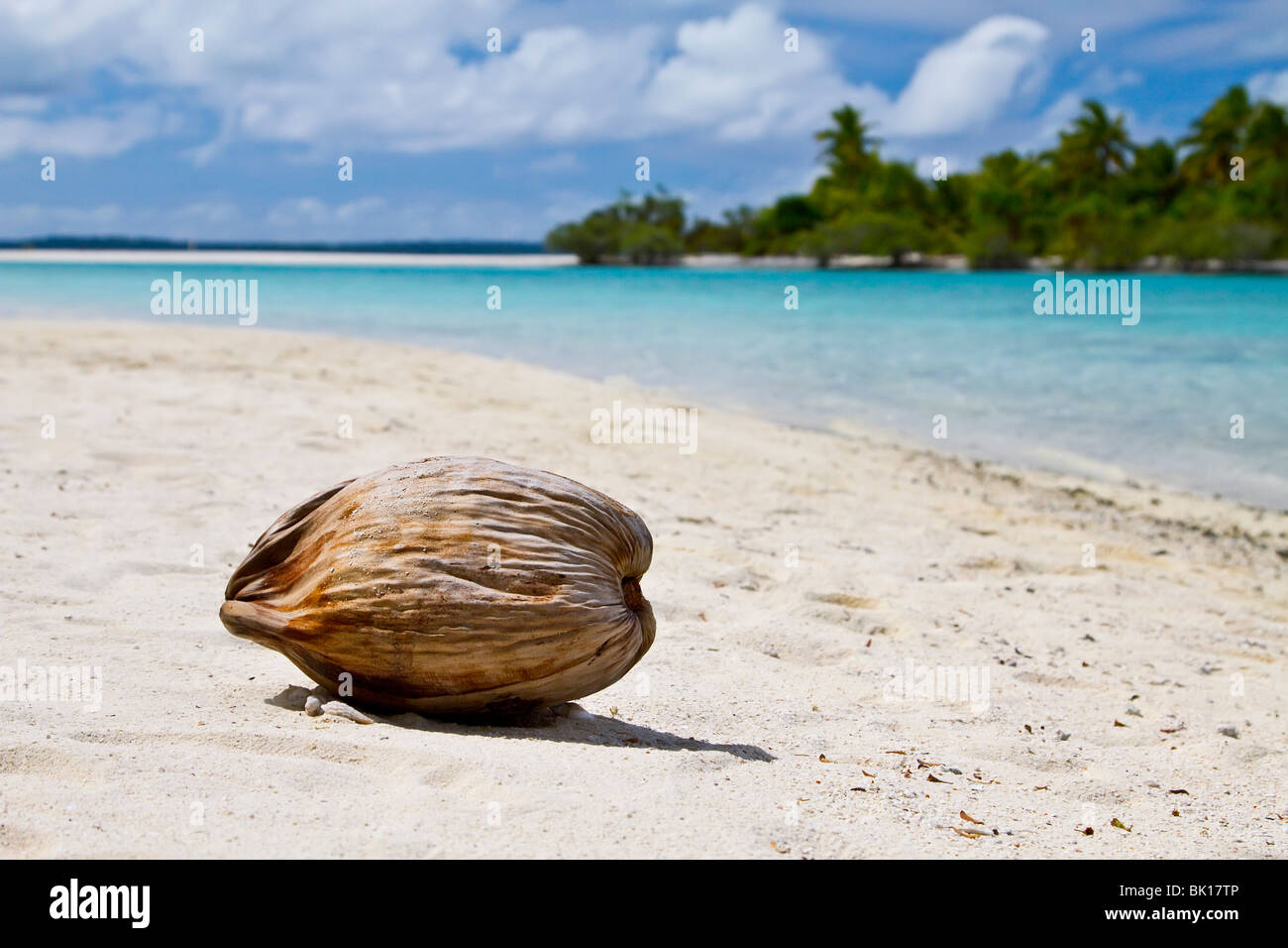 Coconut on beach - Stock Image