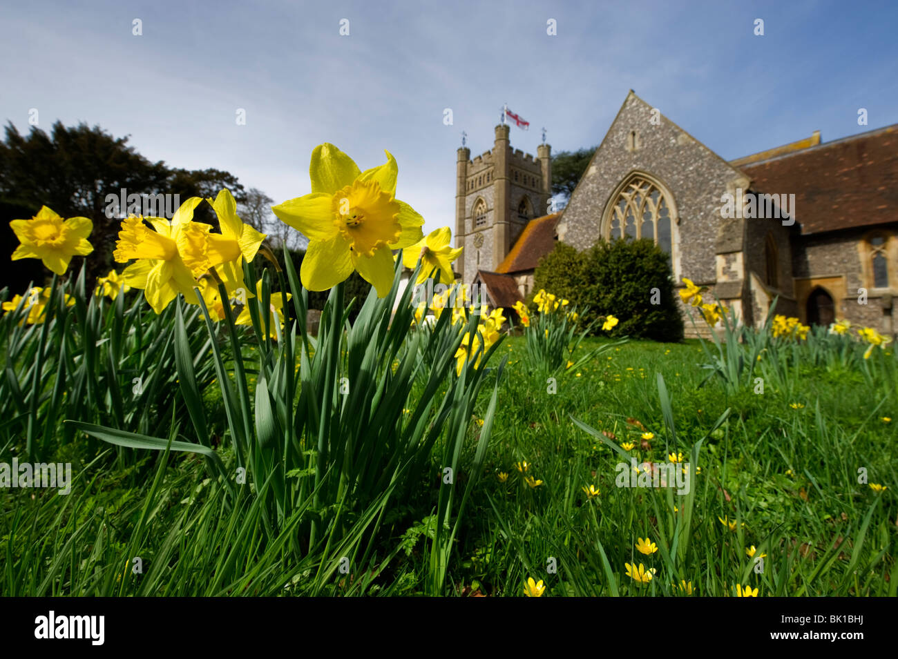Churchyard Spring daffodils in the grounds of St Mary the Virgin parish church Hambleden Buckinghamshire UK - Stock Image