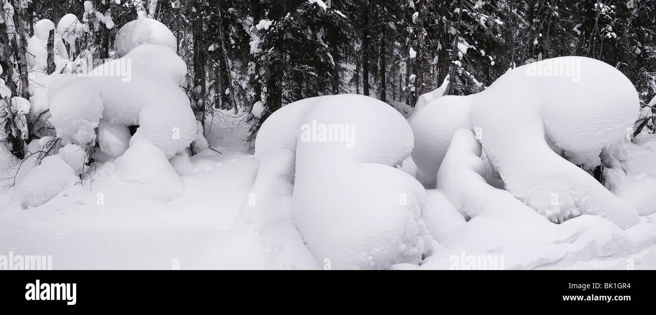 Fanciful Snowdrifts in winter forest of Siberia - Stock Image