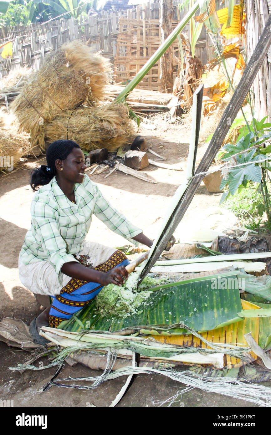 Africa, Ethiopia, Omo region, Chencha, Dorze village. Woman shaving a leaf of the fruitless Banana - Stock Image