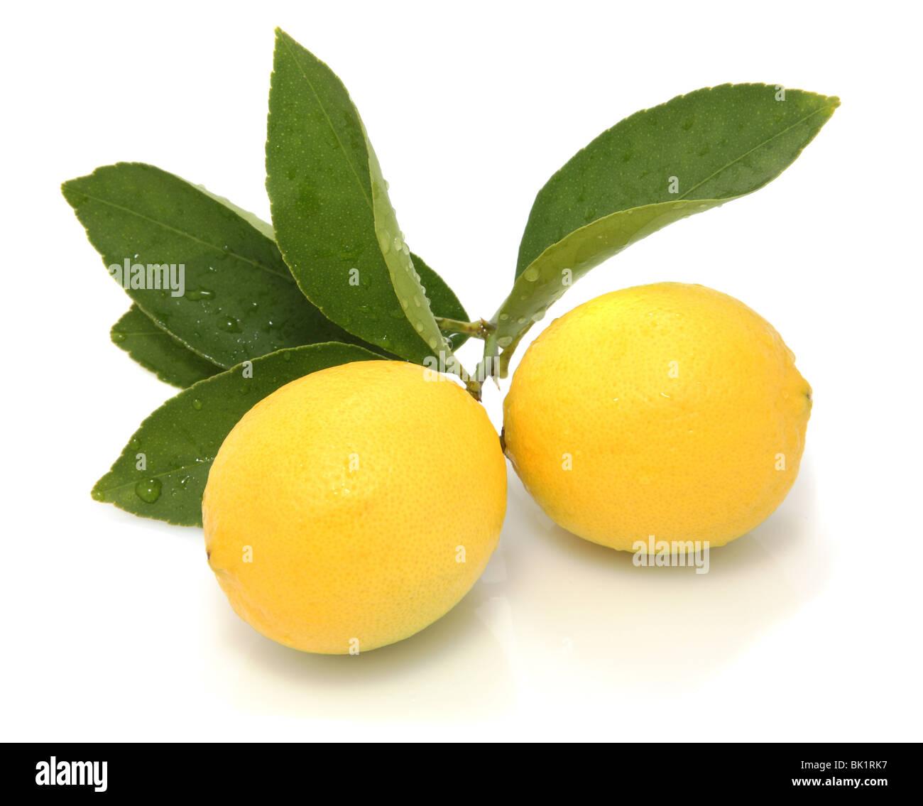 Fresh lemons with leaves on white background - Stock Image