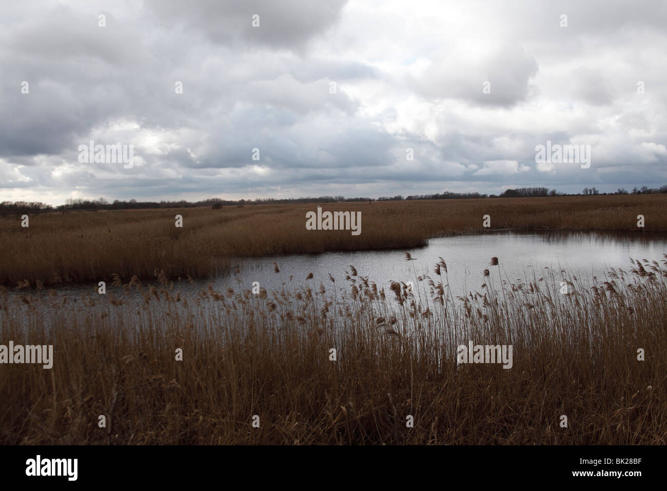RSPB Lakenheath fen view from Joist viewpoint across reserve Stock Photo