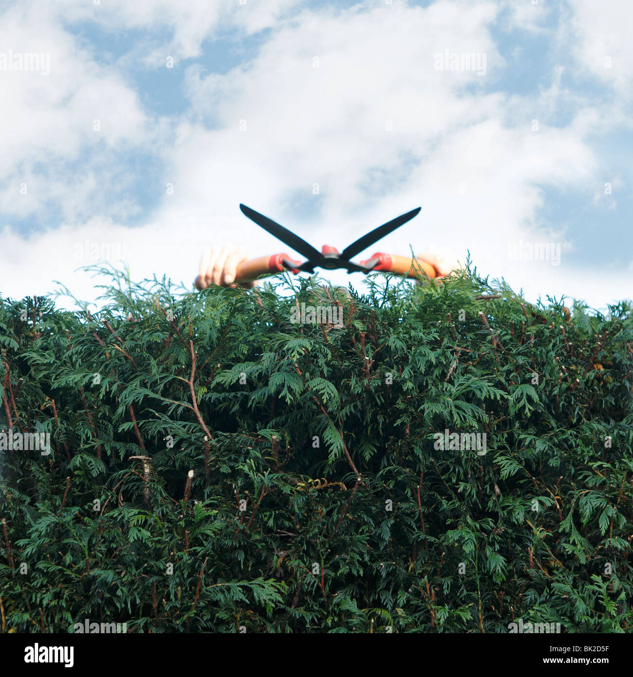 Man pruning hedges - Stock Image