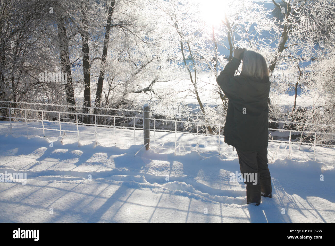 Woman using binoculars watching birds in ice-covered trees after a heavy fall of snow. Powys, Wales. - Stock Image