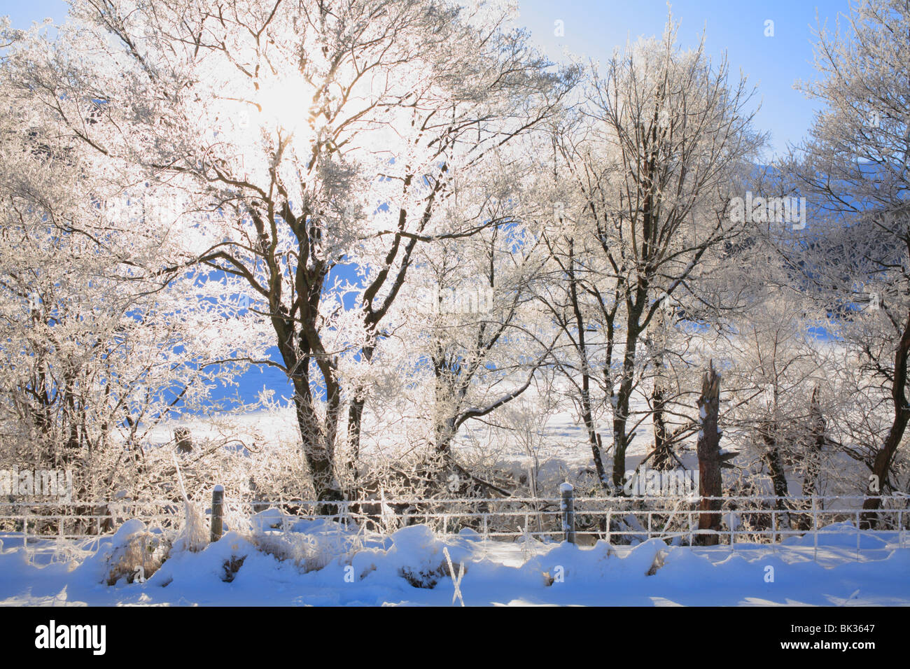 Sunshine through ice covered trees beside a river, after several days of extreme cold and still air. Powys, Wales. - Stock Image