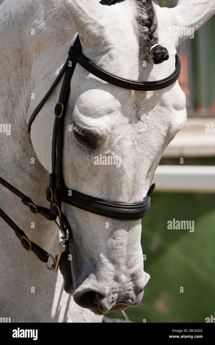 Detail of the head of a purebred Spanish horse - Stock Image