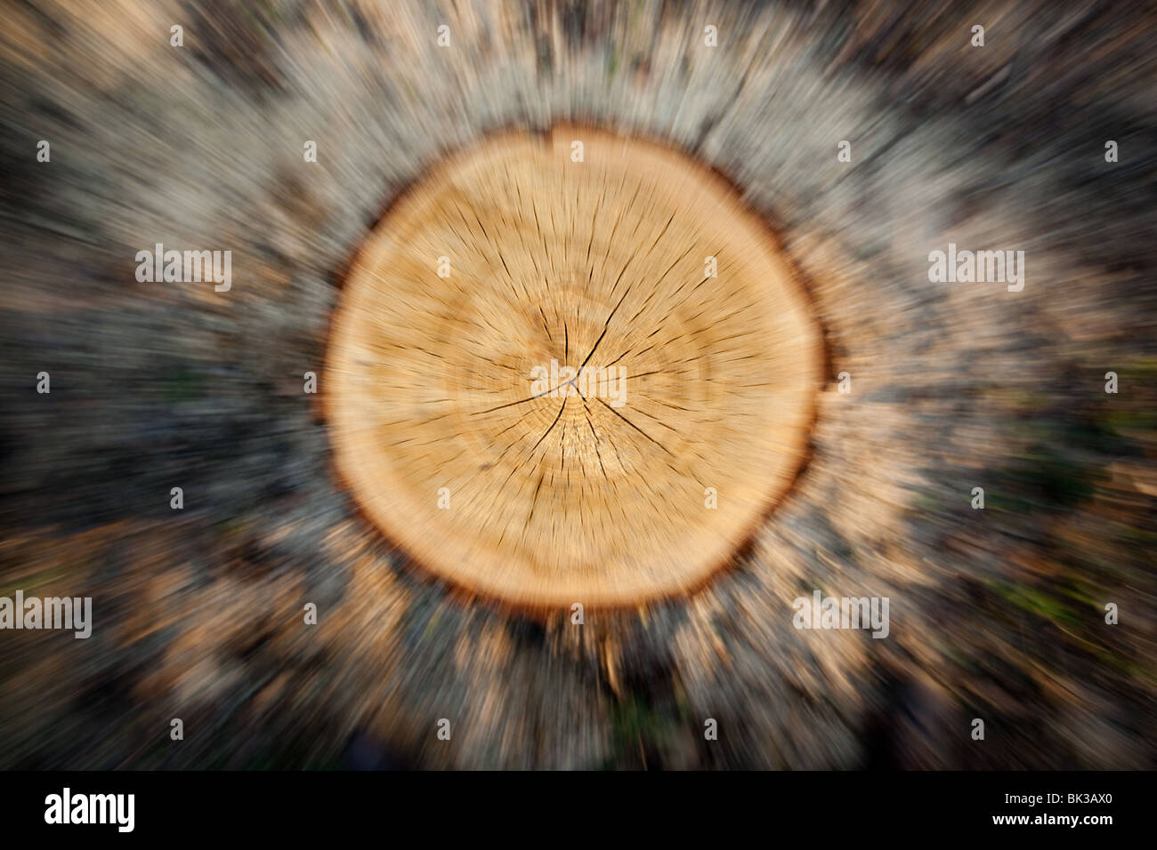 Zoom on a tree stub. An equal cut. - Stock Image