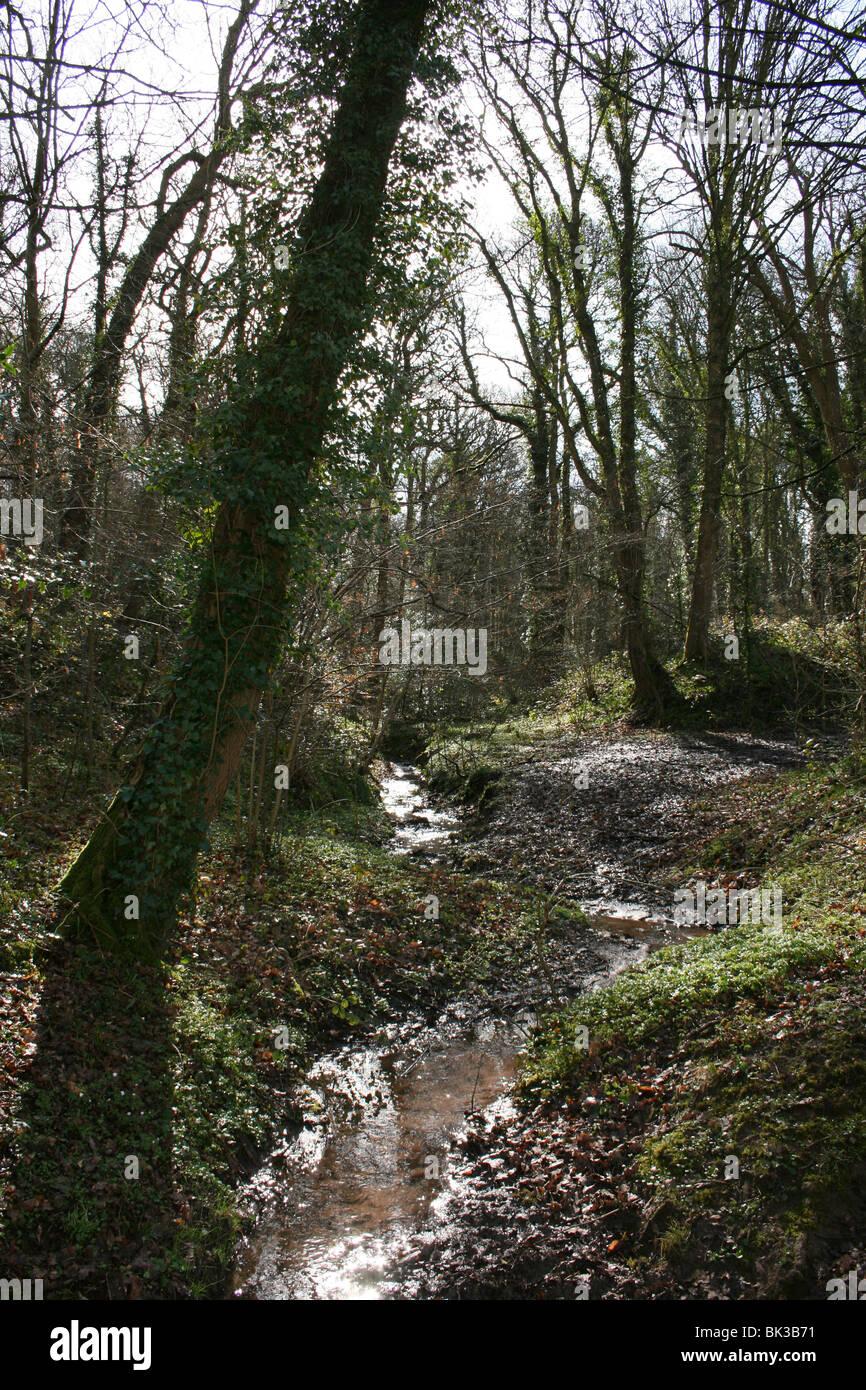 Woodland Stream In Dappled Sunlight Dibbinsdale LNR, Wirral, UK - Stock Image