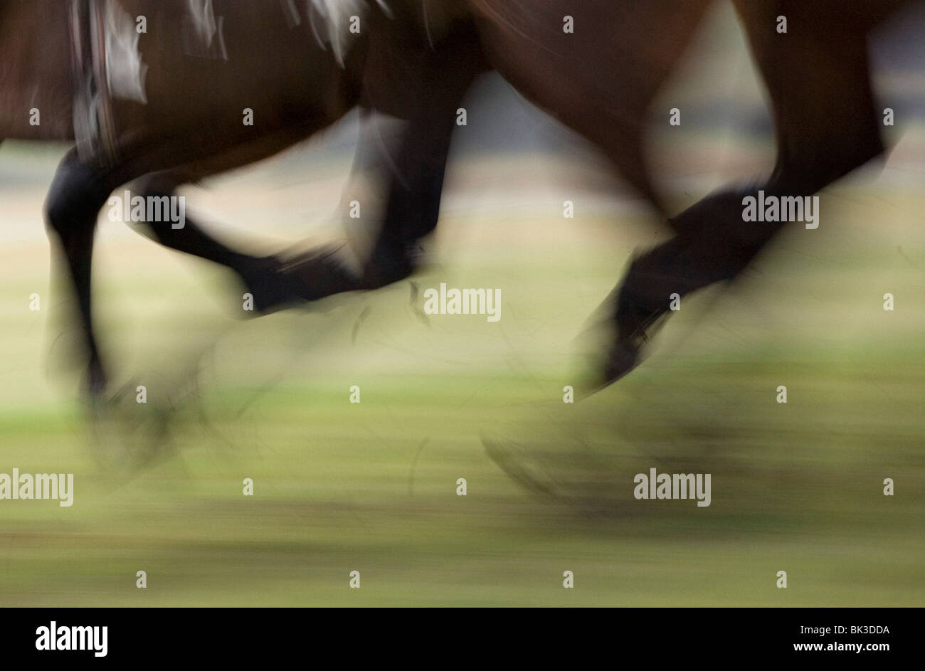 Horses hooves in a race Stock Photo