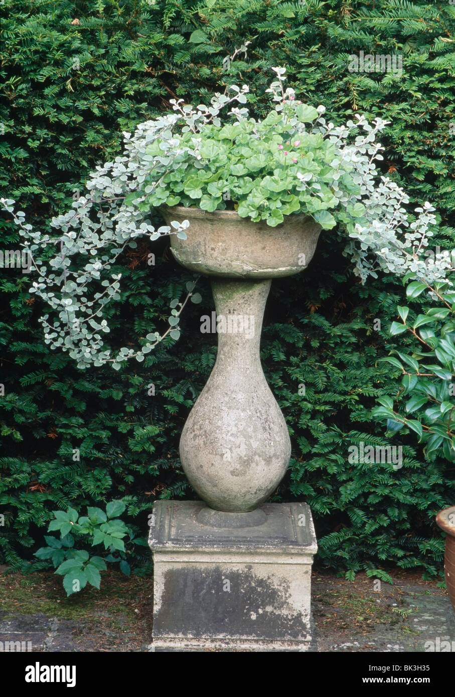 Themed Planting Of Silver And Green In A Stone Urn On Plinth By A