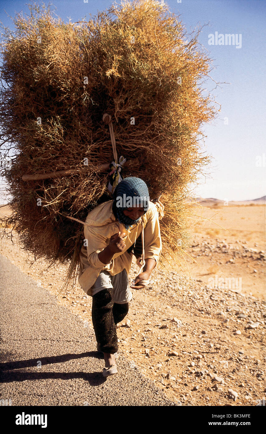 Worker carrying straw and brush in Ouarzazate Province near El Kelaa, Morocco - Stock Image