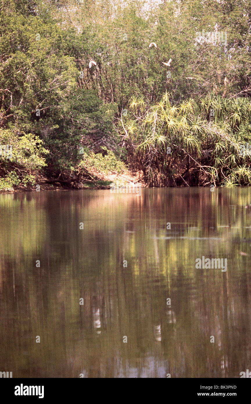 Water and birds in Kakadu National Park, near Darwin, in the Nothern Territory of Australia Stock Photo