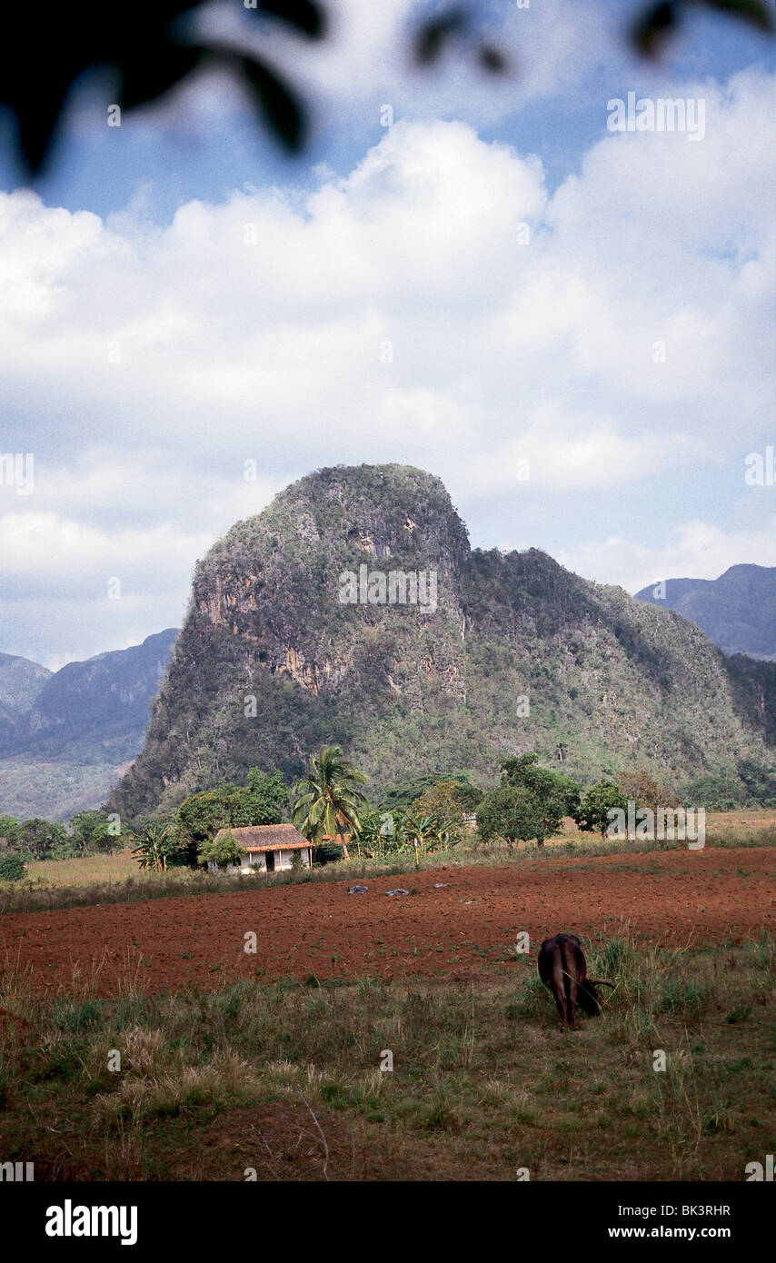 Agricultural field, house, and 'Pin Cushion Mountains', in the Vinales Valley, Pinar del Rio Province, Cuba - Stock Image
