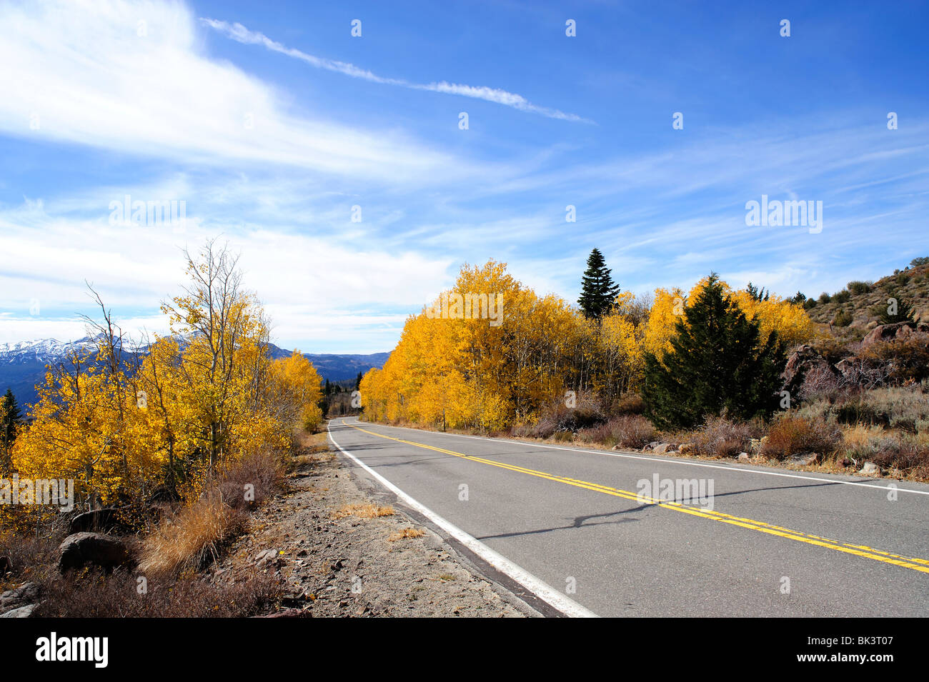 Autumn Aspens, Alpine County California - Stock Image