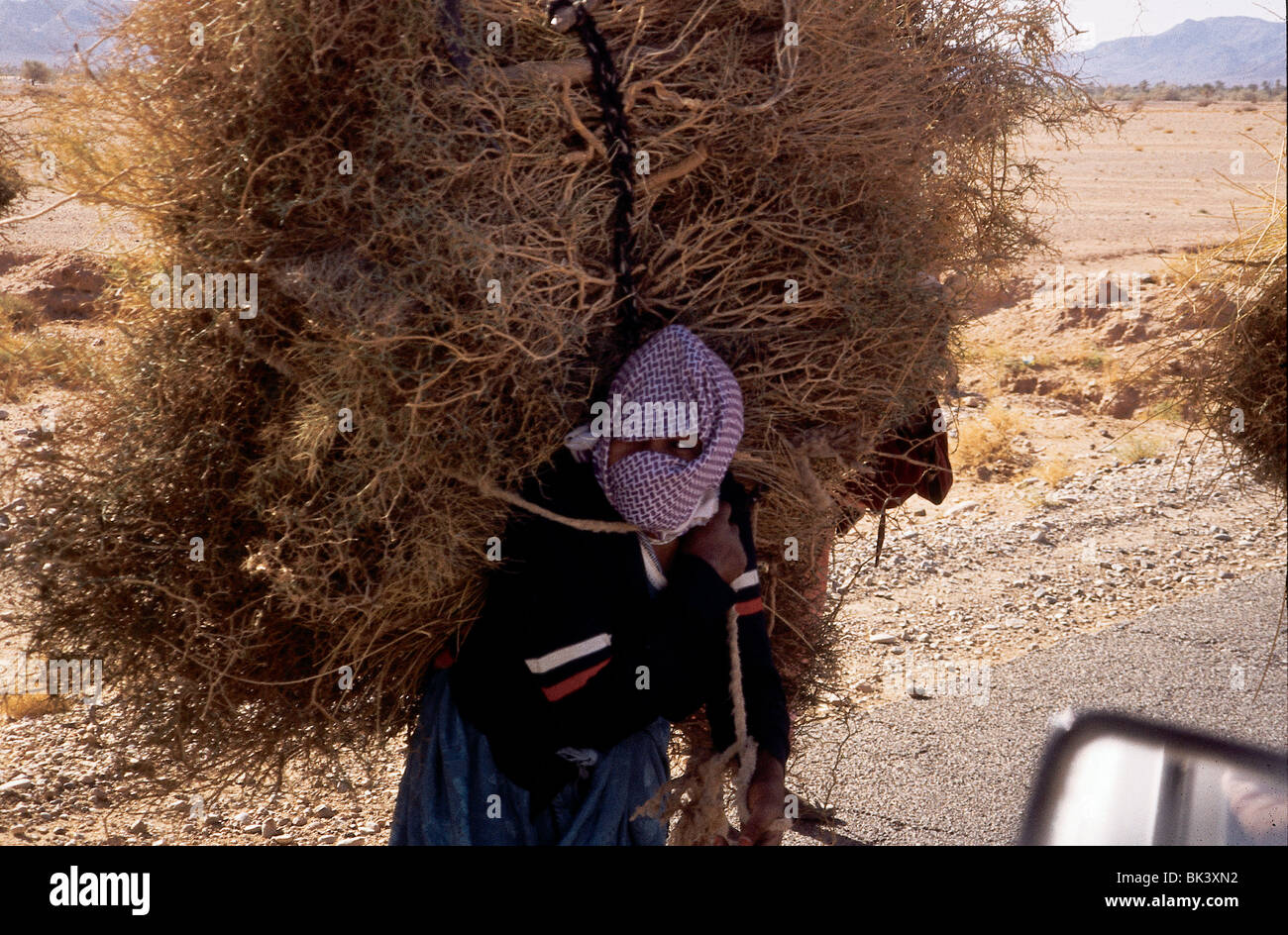 Worker carrying straw and brush near El Kelaa, Morocco - Stock Image